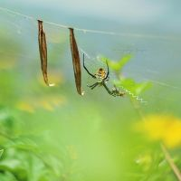 Hang in there, Buddy by simplysuzu