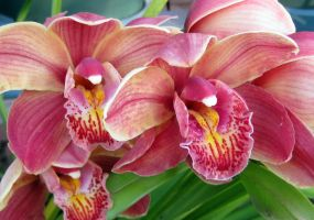 Karl's orchids 6 by karincharlotte