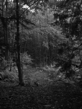 Black and White Forest by Gun-Street-Girl