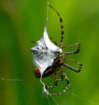 Spider by barcon53