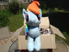 Dashie Flies In From Oz! by bekindsorewind