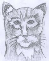 Realism -Cat by Fran48