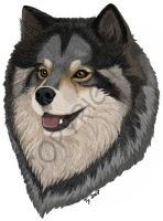 Finnish Lapphund by saeko-doyle