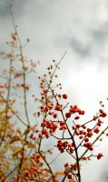 Spindle Fruit by raccroc