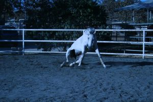 gray horse stock 7 by xbr0kendevotion
