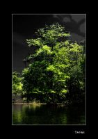 Green tree, Black Swamp by TomFawls