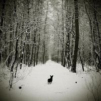 Luna in snow. by magnesina