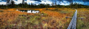 Swamp HDR Panorama by RLPhotographs