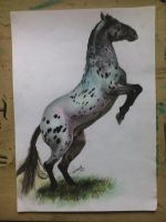 Horse drawing with colored pencils (for request) by turanneth