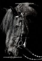 Cheval/Horse by Sadness40