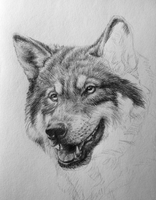 Wolf WIP by NataliWF