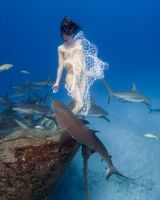 Shark Whisperer by underwaterpix