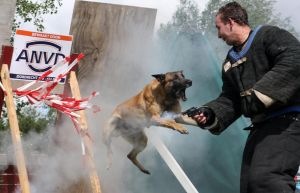Police dog attacking by Asurawolf