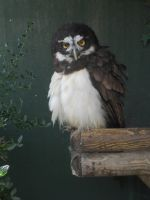 Liberty's Owl, Raptor & Reptile Centre 005 by VIRGOLINEDANCER1