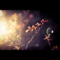 Oh sunny day II by EosChris91