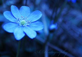 Blue. by Ishilla