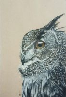 owl by GilcaOferral