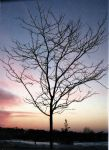 Tree at sunset by cymrueira