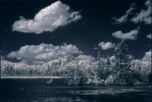 Summer in IR by IgorLaptev