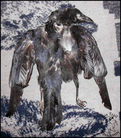 Carrion Crow Skin FOR SALE by EternalEmporium