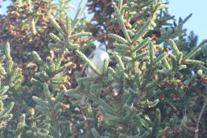 Checking the Pinecone Tree, Birdie On the Branch by Miss-Tbones
