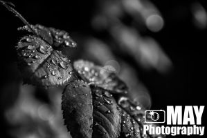 Water droplets 2 by Askingtoattackmeghan