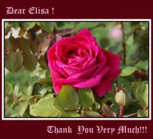 Thank you  dear Elisa by SpringLilac