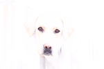 One of my Dogs- Tobi by pabloespinosa