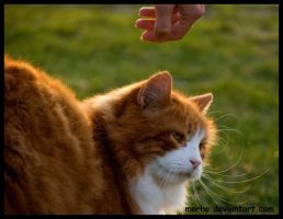 do not touch me by morho