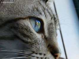 Eye of a cat by AtilioA