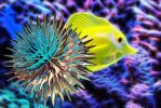 The Fish and the Fractal by loloalien