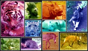 Welcome To My Multicoloured Zoo by Ionday