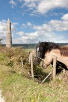 pair of Irish horses and ancient round tower by morrbyte