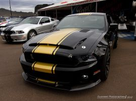 Super Snake by Swanee3