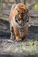On the prowl... by Seb-Photos