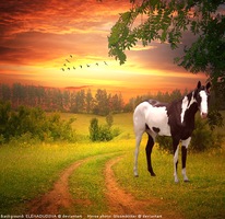 Manipulation paint horse by Elineeey