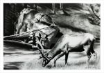 Elk charcoal drawing by Art-SamiKahelin
