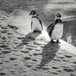 Happy feet by fogke