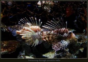 Lion Fish by HettyPoo