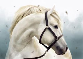 white horse by SenileGirl