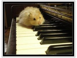 Hamster on Piano by Im4gineTheM4gic