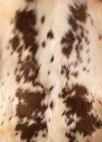 Piebald Deer Skin Close-Up by NaturePunk