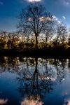 Sky roots by MissPoc