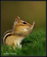 Chipmunk 2 by Ptimac