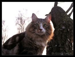 Cat and forest 1 by Zamkowa