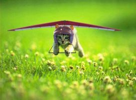 Let's fly! by AngieRedondo