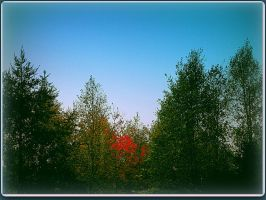 Mixed Forest in Fall by surrealistic-gloom
