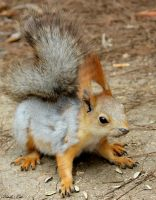 squirrel 4 by blackmildew