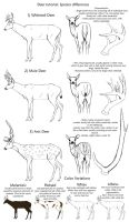 Basic Deer Species tutorial by creepygoth666