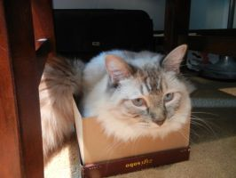 i heart boxes by threefourthsginger